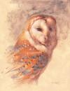 """Barn Owl Study"""