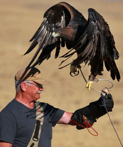 Gallery: Hunting With A Golden Eagle
