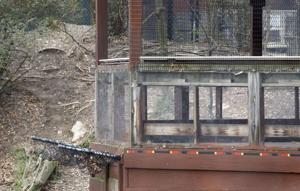 Pittsburgh Zoo Child _Denn(3).jpg