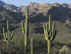 Sabino Canyon to host daylong Beyond Tucson event