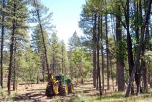 Contractors ramp up for Arizona forest-thinning project
