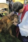 Blessing of Animals service is Sunday