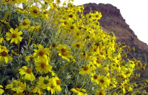 Photos: Southwest wildflowers