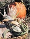 Native garden takes root at historic ranch