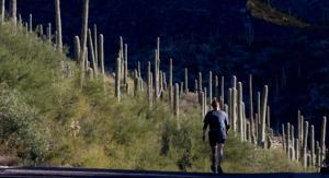Images of Sabino Canyon