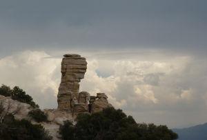 The Santa Catalina Natural History Tour