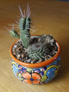 Grad gifts cactus