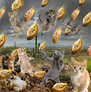 Tweet of the Day: Raining regular cats and Sonoran dogs