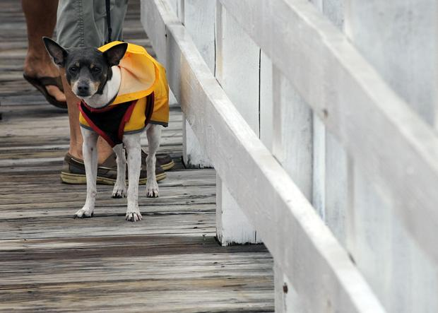 Tips to protect pets in storms, flooding