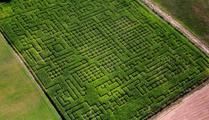 Photos: Corn mazes