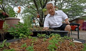 Johnny Appleseed of hollyhocks spreads love of gardening