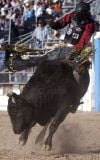 This time around, bull rider pulls rank on Gatekeeper