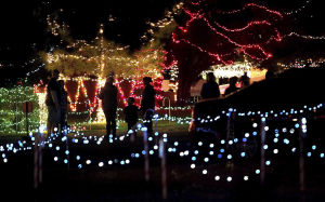 Party bikes to roll through Winterhaven lights