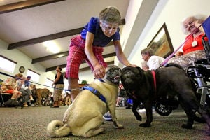 Photos: Hundred Palms dog show