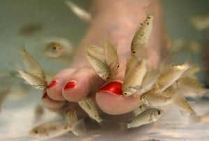 Supreme Court refuses to consider fish-nibbling foot spa case