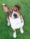 Waived adoption fees at HSSA's Memorial Day weekend bash