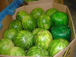 Nogales port officers seize pot disguised as watermelons