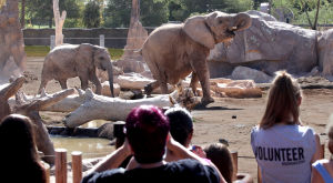 Shower games predict girl for Tucson zoo's pregnant elephant