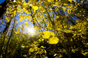 Photos: Fall foliage in Southern Arizona