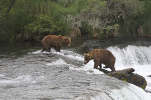 Bears, humans coexist in Alaska park