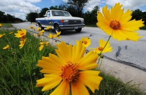 Photo of the day: Brightening the roadside
