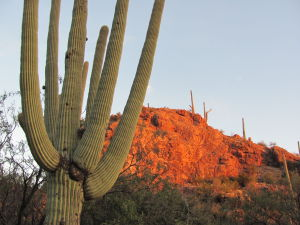 Ventana Canyon lit by magical autumn sunsets