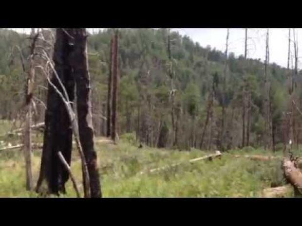 Video: Trek to Mint Spring