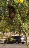 Wildflower season is also bee season; swarms are a danger