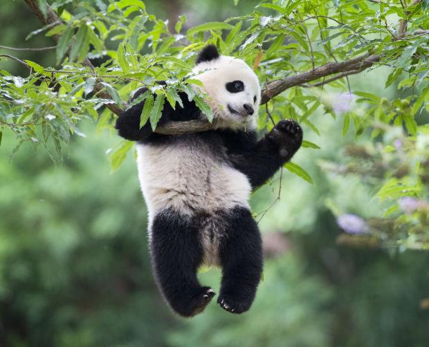 Photos: Baby zoo animals