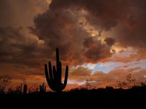 427 reader-submitted photos of Tucson sunsets