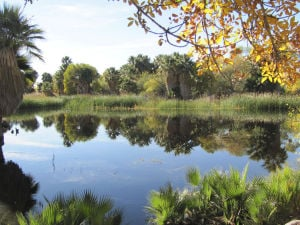 Water returning to Agua Caliente Park's main pond