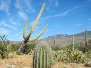 Saguaro Park trail will be wheelchair accessible