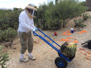 Steller: Tucsonan on quest to breed super bees