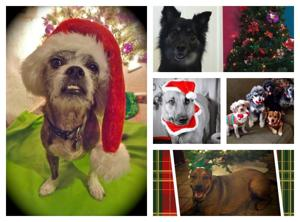 54 Tucson pets who are ready for Santa