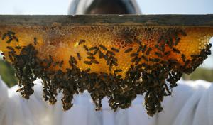 Honey hobby grows into sponsored hives business