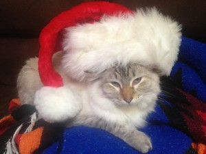Vote for Santa, pet photo faves, see who's ahead