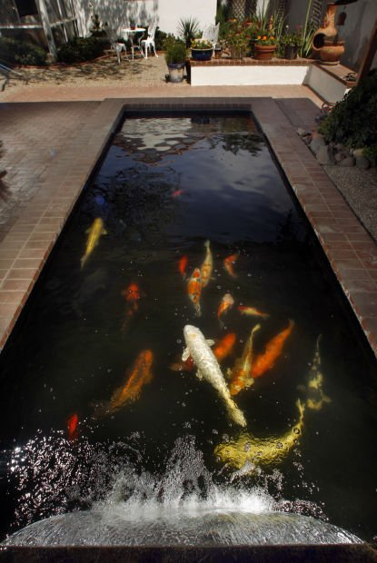 New uses for old swimming pools tucson gardens for Koi pond swimming pool conversion