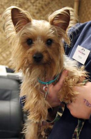 Tucson dog found safe in Wisconsin