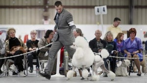 Coyote Classic dog show