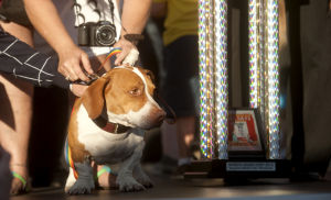 Photos: Is this the World's Ugliest Dog?