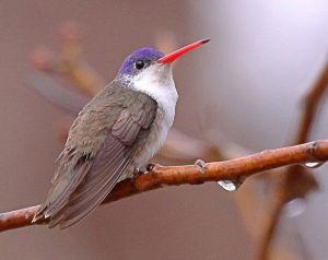 Bird and Wildlife Festival begins Wednesday
