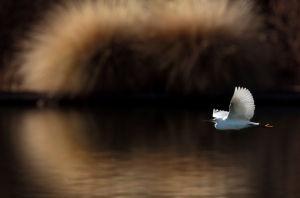 Photos: Urban birds around Tucson