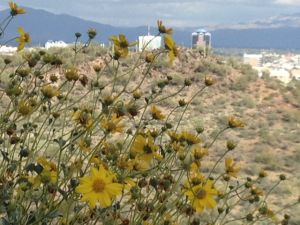 Tucson sets record for warmest winter — again