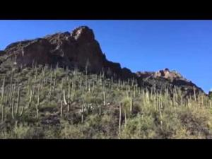 Ventana Canyon: Wet, green and gorgeous