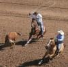 2012 Tucson Rodeo