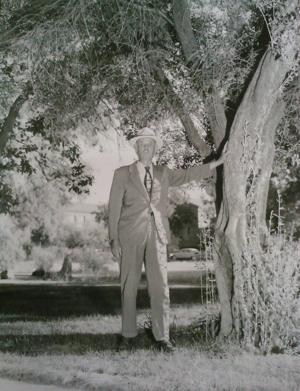 Street Smarts: Here's who to thank - or curse - for Tucson's olive trees