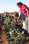 Tours gratis en granjas cercanas a Tucsón