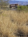 Buffelgrass poses urban fire risk  in Tucson