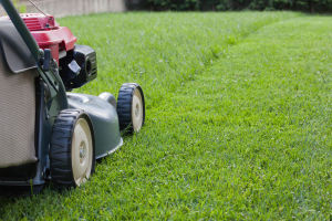 Looking for a Professional Lawn Care Contractor in Tucson Arizona? (520) 254-9086