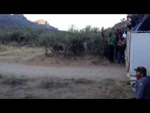 Bighorns released near Tucson